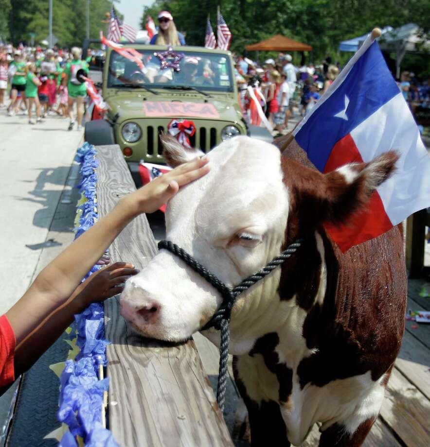 A Hereford steer named Buddy is petted by children as he rides on the Kingwood High School Future Farmers of America float during the Kingwood Civic Club 4th of July Parade Thursday, July 4, 2013, in Kingwood. Buddy is   owned by FFA member Angela Estrems, who is 16 and a junior at Kingwood H.S. Photo: Melissa Phillip, Houston Chronicle / © 2013  Houston Chronicle