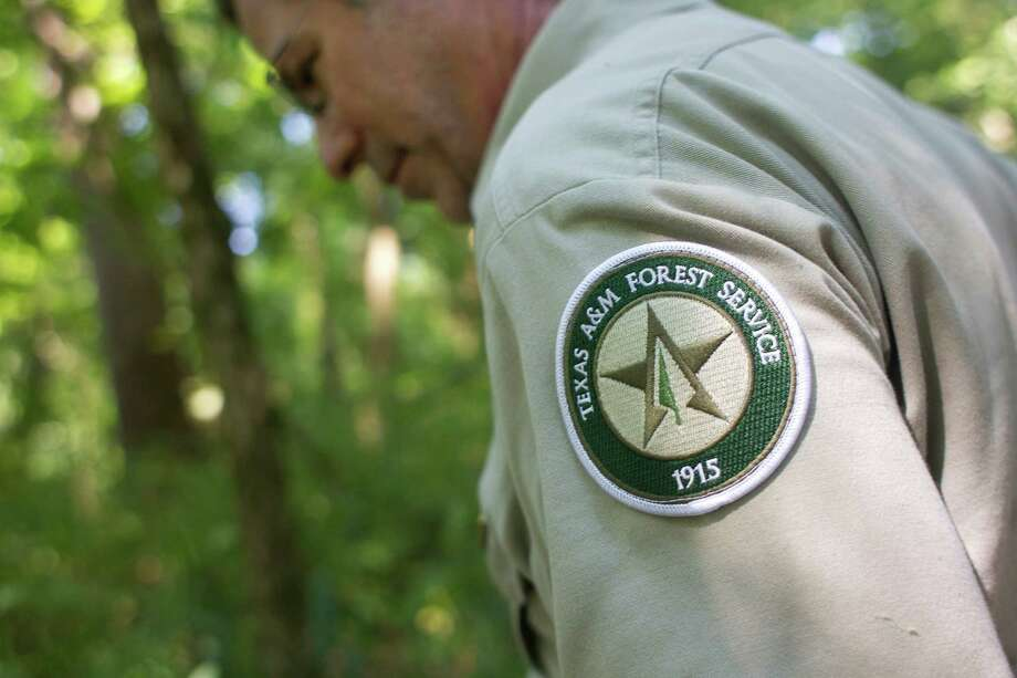 """Michael """"Mickey"""" Merritt a regional urban forester with the Texas A&M Forest Service looks for the new largest American sycamore tree in Harris County, which is found in east Houston on the Harris County Flood Control District's Greens Bayou Water Shed Wednesday, July 3, 2013. Photo: Johnny Hanson, Houston Chronicle / © 2013  Houston Chronicle"""