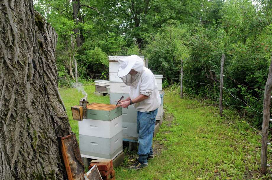 Stephen Wilson, wearing a bee suit, checks on one of his 11 hives in his apiary on Wednesday, July 3, 2013, in Altamont, N.Y.  Wilson said that each of his hives have between 60,000 to 100,000 bees. (Paul Buckowski / Times Union) Photo: Paul Buckowski / 00023033A
