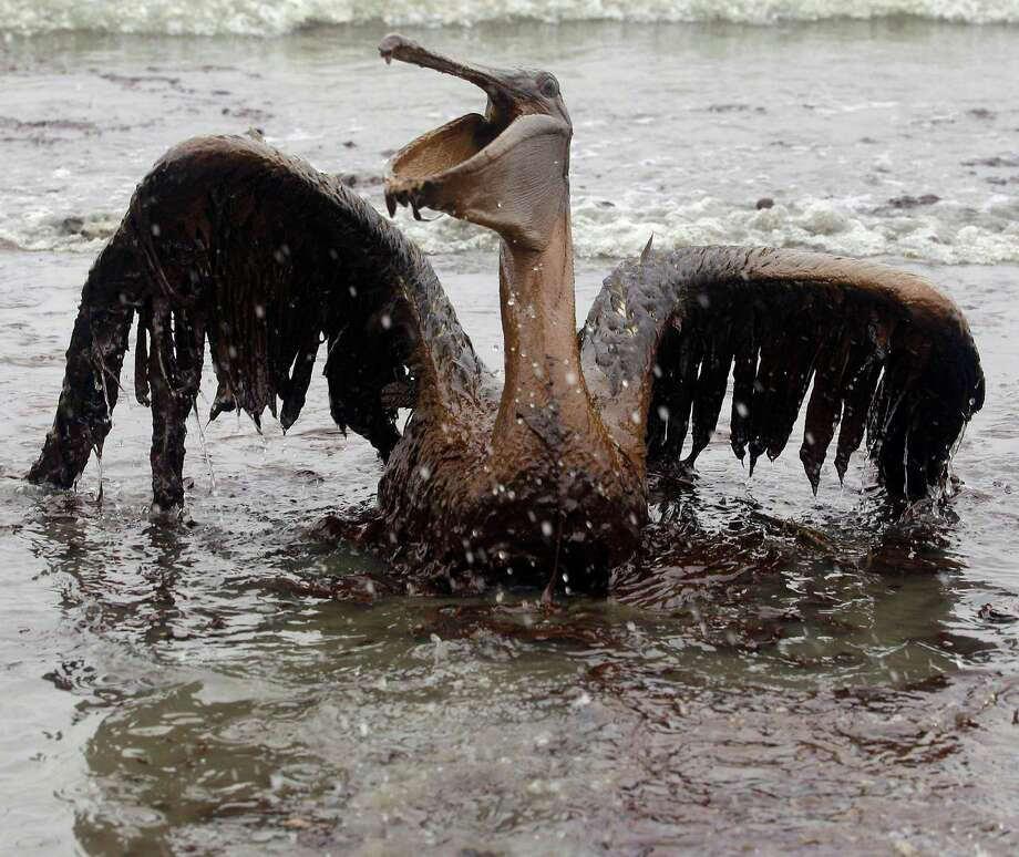 FILE - In this June 3, 2010, file photo, a brown pelican is seen on the beach at East Grand Terre Island along the Louisiana coast. The Justice Department on Wednesday, Dec. 15, 2010, sued BP and eight other companies in the Gulf oil spill disaster in an effort to recover billions of dollars from the largest offshore spill in U.S. history. (AP Photo/Charlie Riedel, File)FILE - In this June 3, 2010, file photo, a brown pelican is seen on the beach at East Grand Terre Island along the Louisiana coast. The Justice Department on Wednesday, Dec. 15, 2010, sued BP and eight other companies in the Gulf oil spill disaster in an effort to recover billions of dollars from the largest offshore spill in U.S. history. (AP Photo/Charlie Riedel, File) Photo: Charlie Riedel, STF / AP