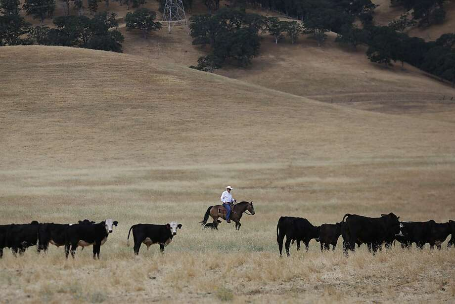 Jack Roddy rides through the cattle fields he will still own after he sells nearby land to the East Bay Regional Park District in Antioch. Photo: Ian C. Bates, The Chronicle