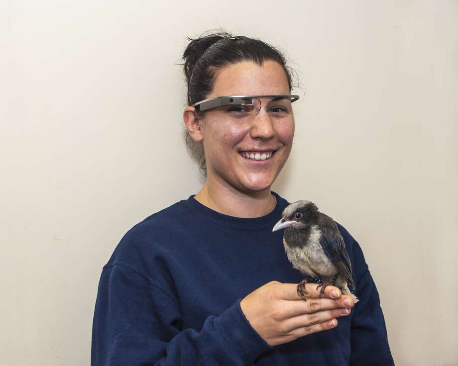 April Zimpel is a bird keeper at the Houston Zoo and is using Google Glass to show what a day in the life of a zoo employee is like.
