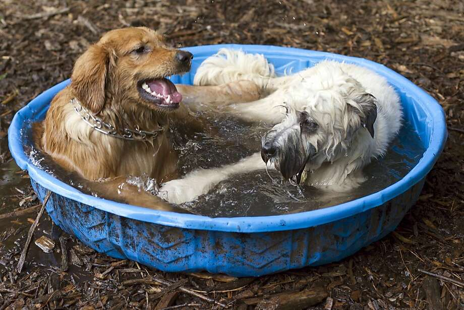 This is kind of romantic, just you and me. Too bad I'm neutered: Hot dogs get acquainted as they cool off in the pool at Millbrook Exchange Park's dog park in Raleigh, N.C. Photo: Robert Willett, Associated Press