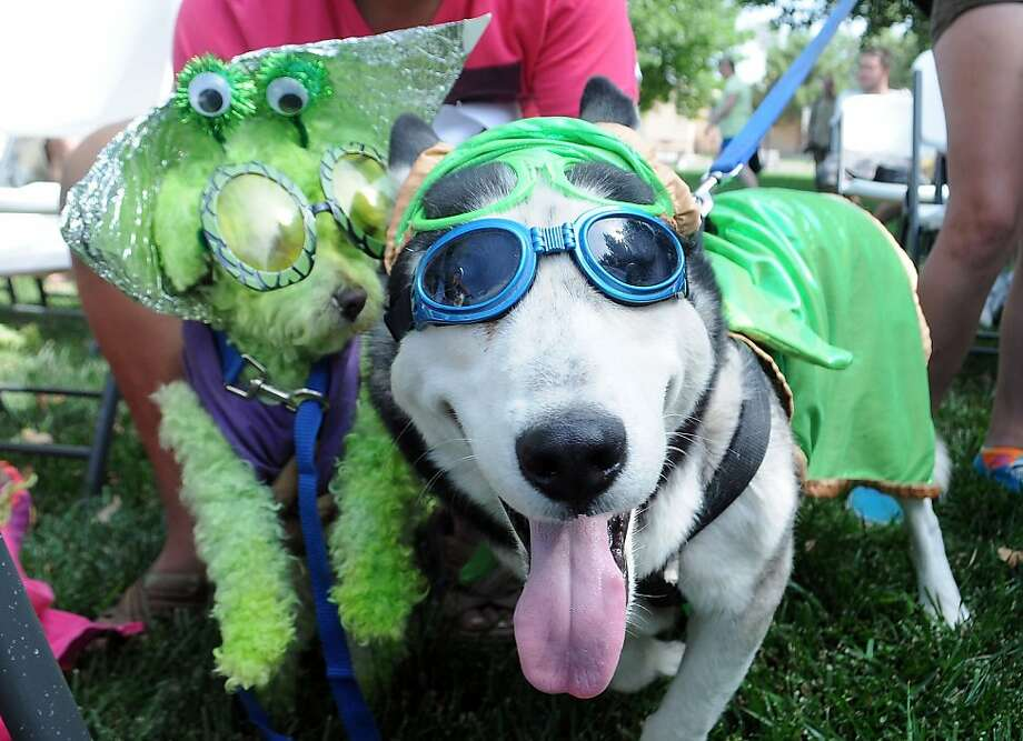 "Plan K-9 from outer space:Tobie the ""King of Mars"" (left) and Nanook ""Superdog"" get acquainted at the Alien Pet Costume Contest of the UFO Festival in Roswell, N.M. Photo: Mark Wilson, Associated Press"