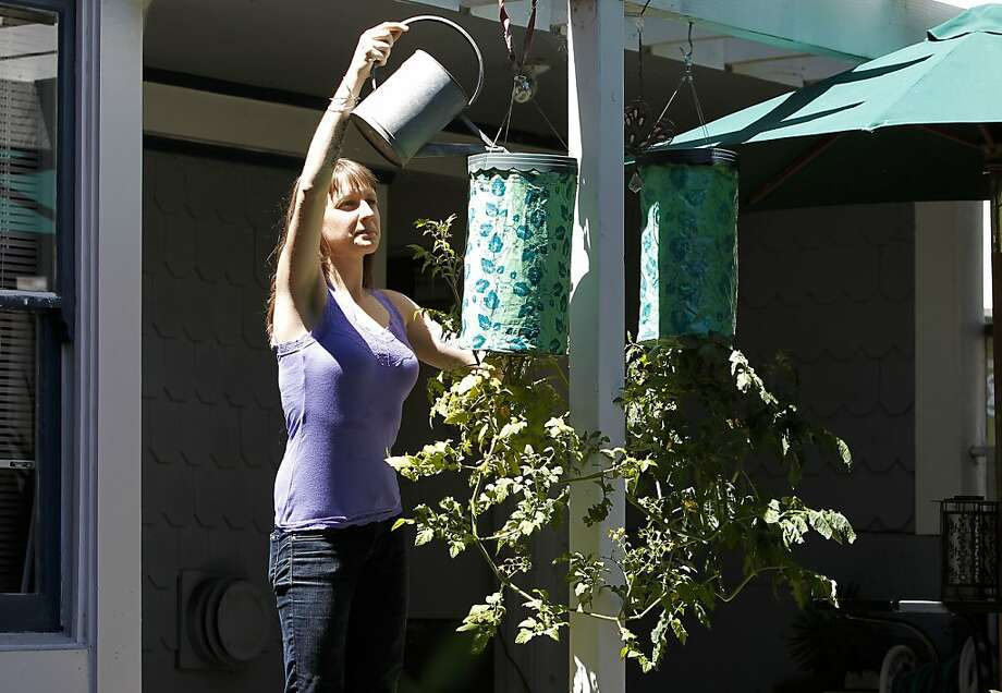 Eating-disorder survivor Katie TerHorst cares for the hanging tomato plants in her backyard vegetable and herb garden. Photo: Michael Macor, The Chronicle