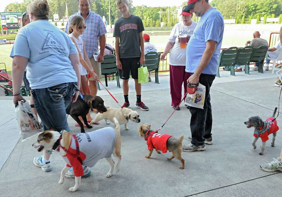"Dogs greet each other at the ""Bark in the Park Night"" at a Tri-City ValleyCats game against Aberdeen at Bruno Stadium on Monday, July 8, 2013 in Troy, N.Y. (Lori Van Buren / Times Union) Photo: Lori Van Buren / 00023063A"