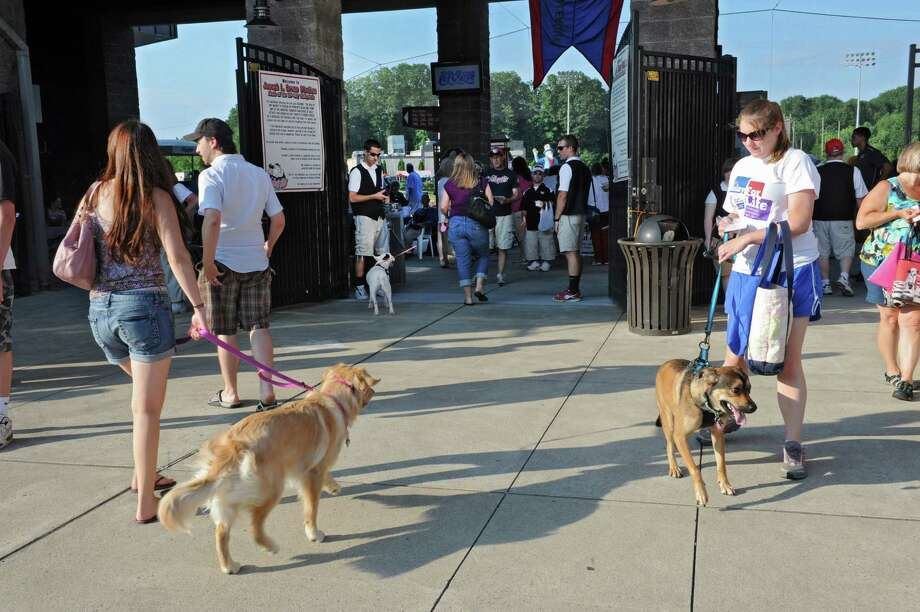"Fans bring their dogs for the ""Bark in the Park Night"" at a Tri-City ValleyCats game against Aberdeen at Bruno Stadium on Monday, July 8, 2013 in Troy, N.Y. (Lori Van Buren / Times Union) Photo: Lori Van Buren / 00023063A"