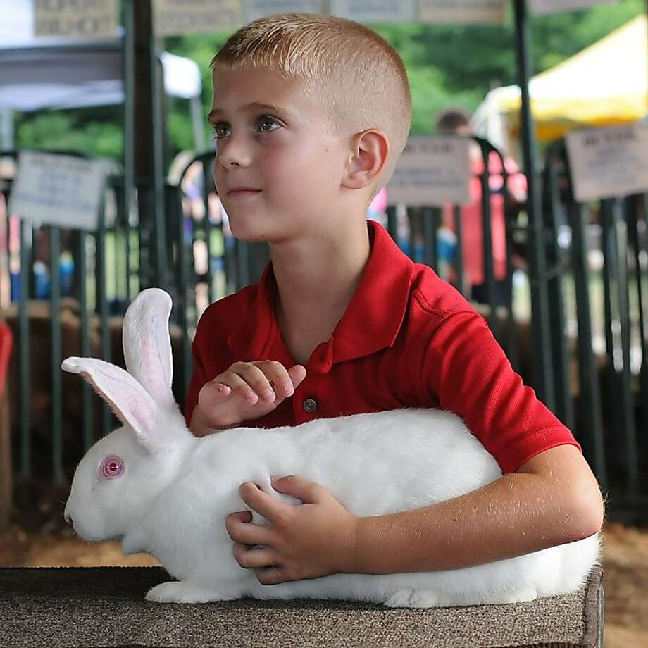 Sound strategy:Tyler Bishop is going to keep staring angelically at the 4-H and FFA judges until they give his big white rabbit a ribbon at the Carter County Fair in Grayson, Ky. Photo: Kevin Goldy, Associated Press