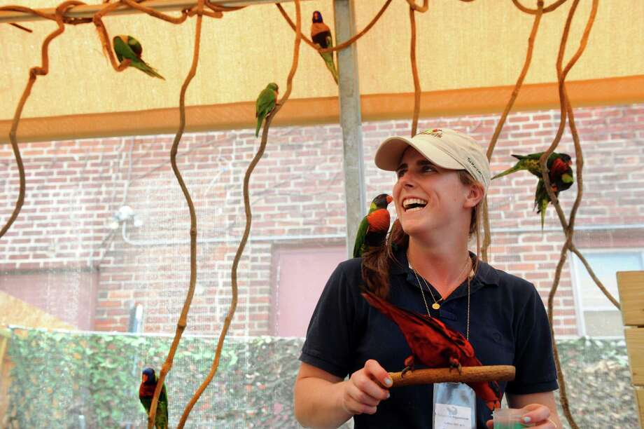 Twenty-one-year-old Emilie Geissinger works in the Lorikeet exhibit at the Maritime Aquarium in Norwalk, Conn. Tuesday, July 9, 2013. Geissinger, from Darien, is a rising senior at Bates College and is interning  at the Maritime Aquarium and hoping her experiences over the summer will help her decide on a career path. Photo: Autumn Driscoll / Connecticut Post