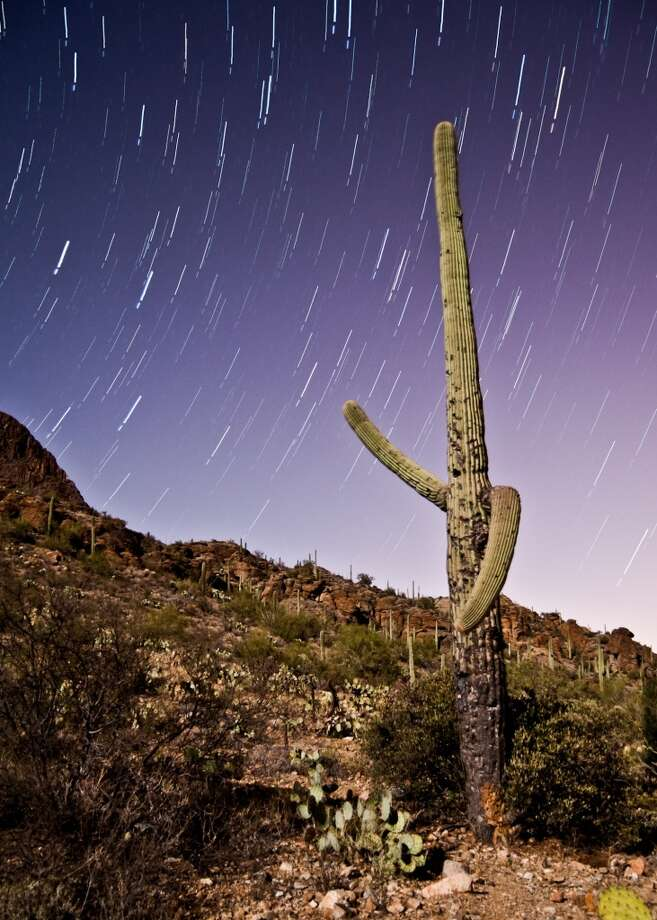 Saguaro National Park(Arizona) is home to an icon of the American West—the giant saguaro, which has an average life span of 150 years. Photo: Chris Summitt