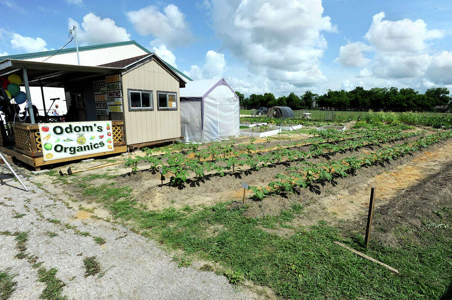 Garden at Odom Middle School's garden. Photo taken Thursday, June 06, 2013 Guiseppe Barranco/The Enterprise Photo: Guiseppe Barranco, STAFF PHOTOGRAPHER / The Beaumont Enterprise