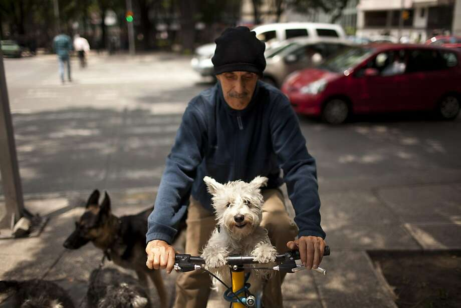 Dog is my co-pilot:When Enrique Lopez walks his four dogs in Mexico City, only three actually walk at any given time. The little ones take turns riding on the handlebars. Photo: Ivan Pierre Aguirre, Associated Press