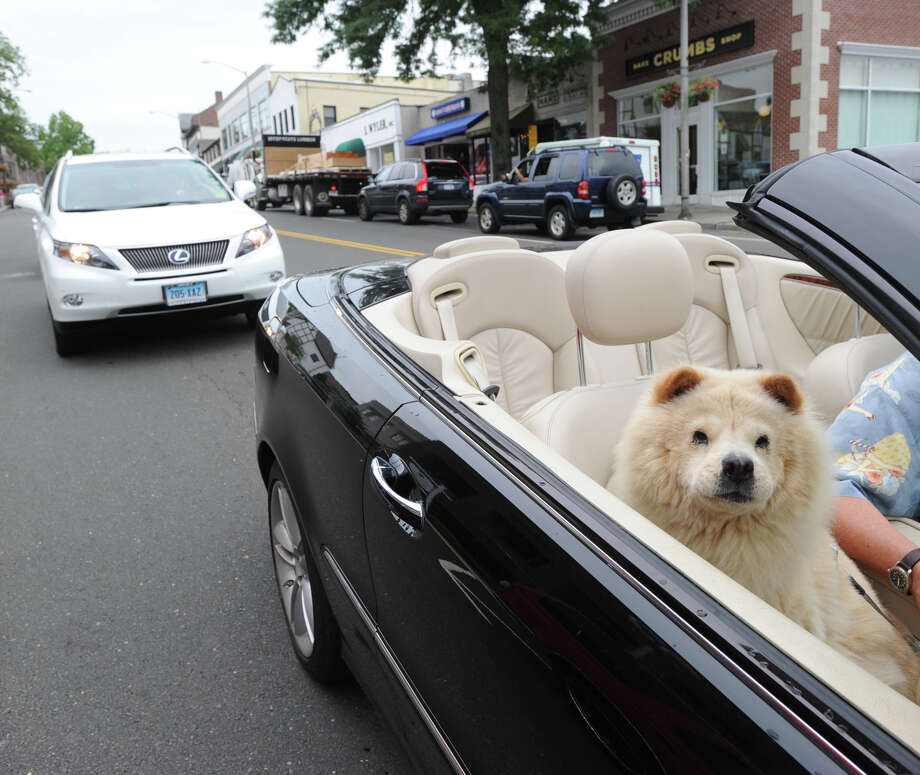 A dog named Lola rides shotgun during the annual Greenwich Sidewalk Sales in the central business district of Greenwich, Thursday, July 11, 2013. Shops and boutiques on Greenwich Avenue and surrounding streets are offering sales and discounted prices on a wide variety of merchandise Thursday July 11 through Sunday July 14. Photo: Bob Luckey / Greenwich Time