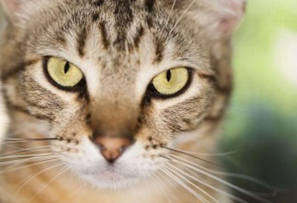 Alabama: Cat Flea Product
