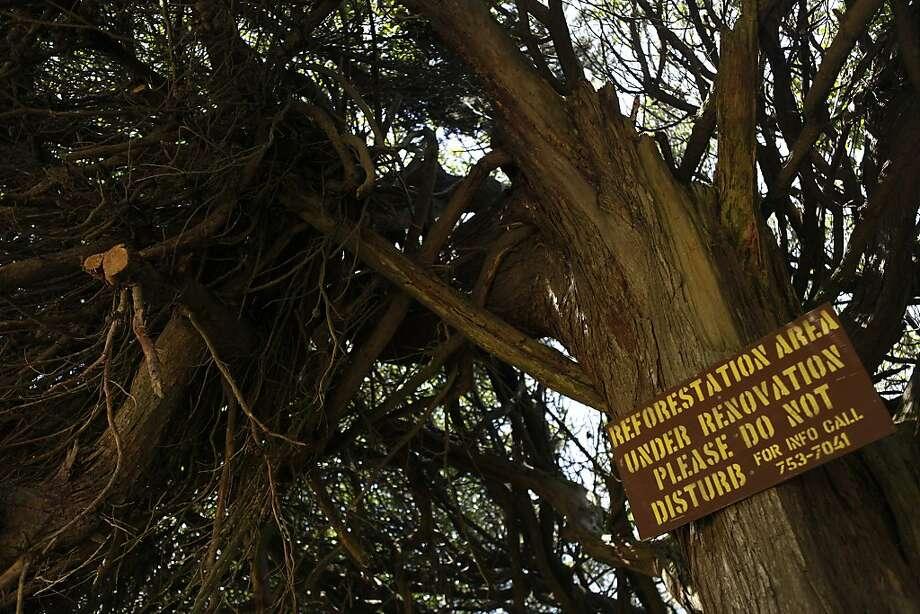 Signs were posted in Golden Gate Park to warn passersby to stay out of an area where tree saplings were snapped and vandalized. Photo: Katie Meek, The Chronicle