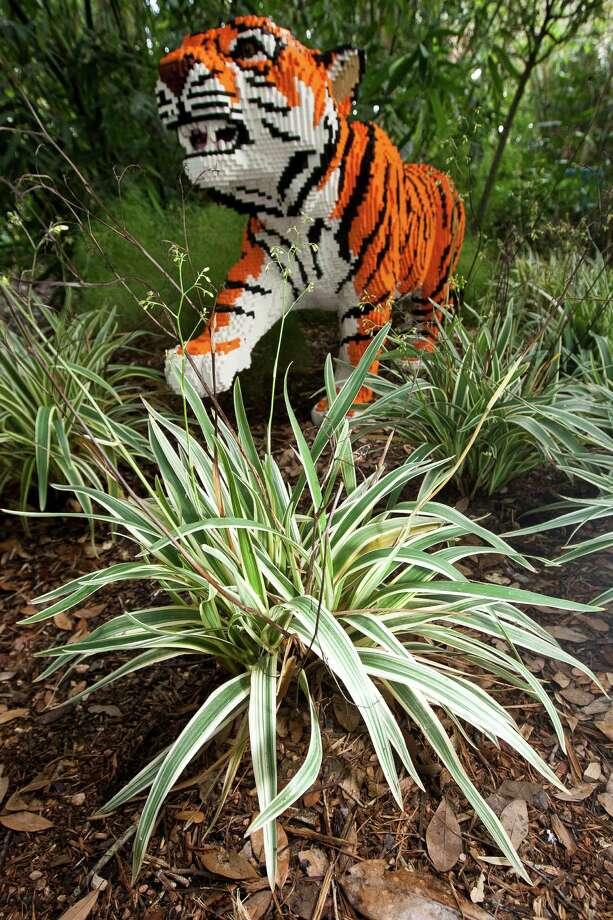 Striped dianella echoes the stripes in the Malayan tiger made of Legos bricks.  ( Nick de la Torre / Houston Chronicle ) Photo: Nick De La Torre, Staff / © 2013  Houston Chronicle