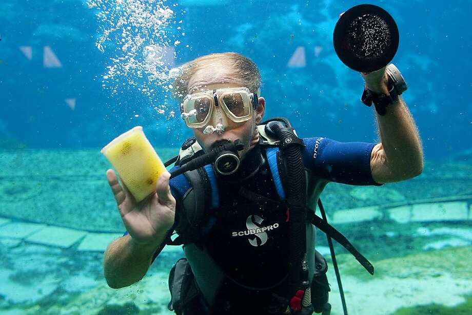 """Mermaid residue is particularly hard to remove:Jim Hansen scrubs residue off the windows inside the underwater theater at Weeki Wachee State Springs Park where the """"mermaid   shows"""" are held. Photo: Octavio Jones, Associated Press"""