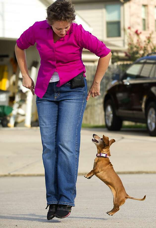 Follow the bouncing wiener dog:Emily Pyle teaches her gravity-resistant dachshund Henrietta a dance routine in Katy, Texas. Pyle and her dancing dogs are scheduled to appear in the upcoming Reliant Park World Series of Dog Shows. Photo: Brett Coomer, Houston Chronicle