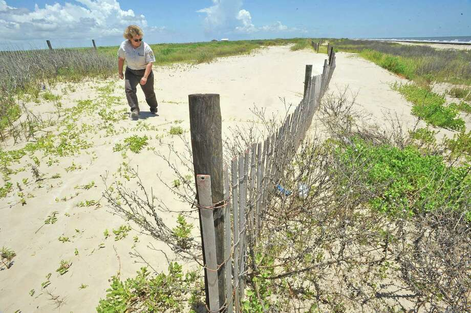 Denise Ruffino, Refuge Manager of the McFaddin National Wildlife Refuge, checks on an area where double sand fences are working to rebuild the sand dunes. They are not made to hang people's trash on, they are there to help the sand dunes rebuild themselves.  It's getting closer to the time when reparation money from the 2010 BP oil spill will finally get to ground level. All along the Texas Gulf Coast, various groups and municipalities will apply for grant funding for projects benefitting a healthy Gulf Coast ecosystem. One such project involves rebuilding the dune system that protected the coastal marshes along the McFaddin shoreline before Hurricane Ike steamrolled them flat. We will visit the McFaddin National Wildlife Refuge and take a look at the stretch where the wetlands are most compromised, where saltwater intrusion is the biggest threat. Besides being important wildlife habitat, beloved of sportsmen, those marshes are Jefferson County's first line of defense from storm surge, and without them, we likely would have been inundated in Hurricane Ike. Dave Ryan/The Enterprise Photo: Dave Ryan