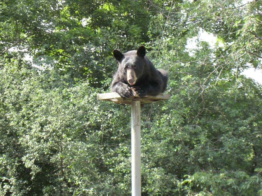 "John Pollock of Lebanon Springs figured he had a solution to the problem of bears destroying his bird feeder -- build a column 10 feet up and eight feet off his deck. ""It never occurred to me that they would be able to climb it,"" he said after snapping this photo. ""Back to the drawing board."""