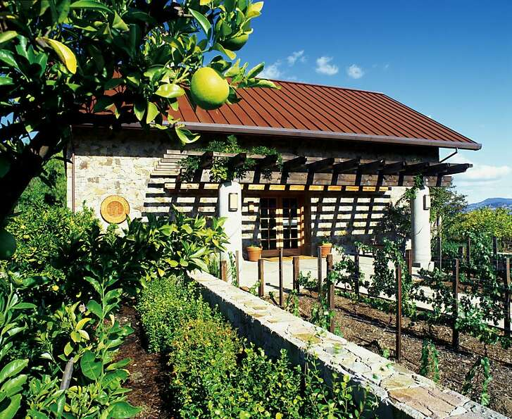 Heitz Tasting Room Citrus Tree