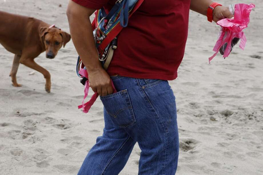 Gunga follows behind Angela Gardner, officer with the Professional Dog Walkers Association, on East Beach at Crissy Field on Friday, July 12, 2013 in San Francisco, Calif.