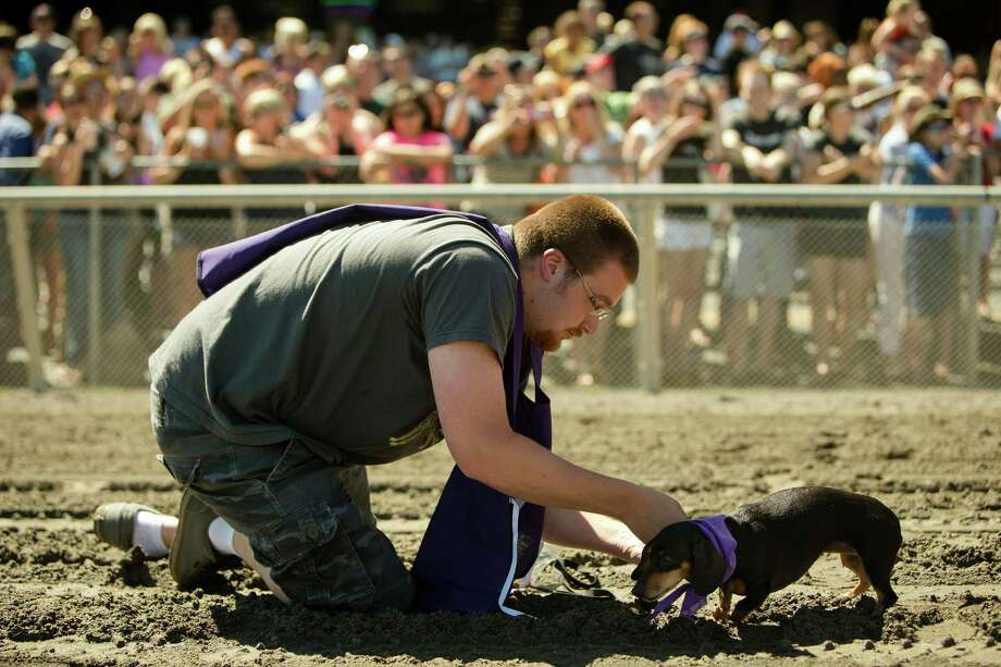 Owners greet their animals after their first heat of racing at the 17th Annual Kent & Alan Wiener Dog Races Sunday, July 14, 2013, at Emerald Downs in Auburn. Three heats of short-legged competition had crowds cheering and participating dog owners rooting for their own little canine athlete. Photo: JORDAN STEAD, SEATTLEPI.COM / SEATTLEPI.COM