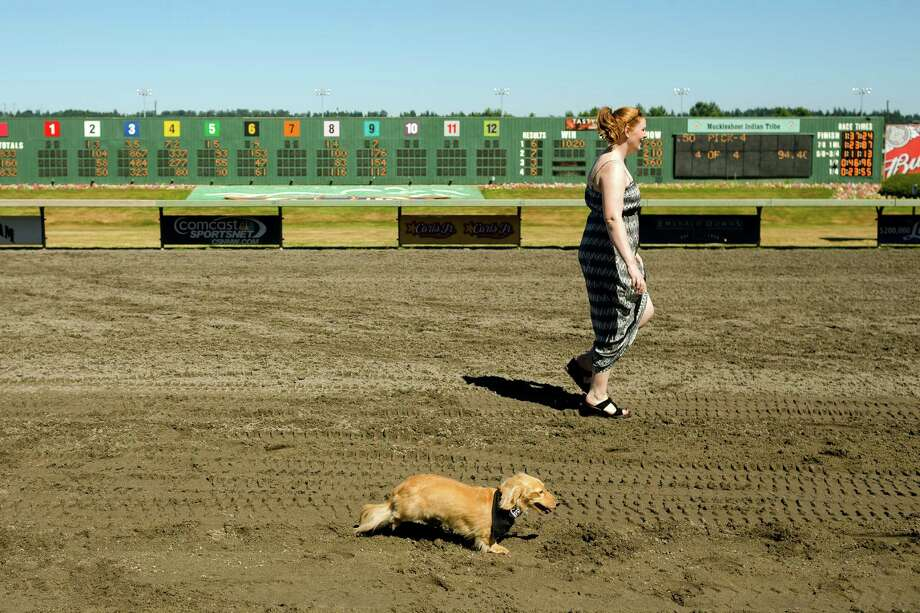 An owner walks next to her dog following a race heat at the 17th Annual Kent & Alan Wiener Dog Races Sunday, July 14, 2013, at Emerald Downs in Auburn. Three heats of short-legged competition had crowds cheering and participating dog owners rooting for their own little canine athlete. Photo: JORDAN STEAD, SEATTLEPI.COM / SEATTLEPI.COM