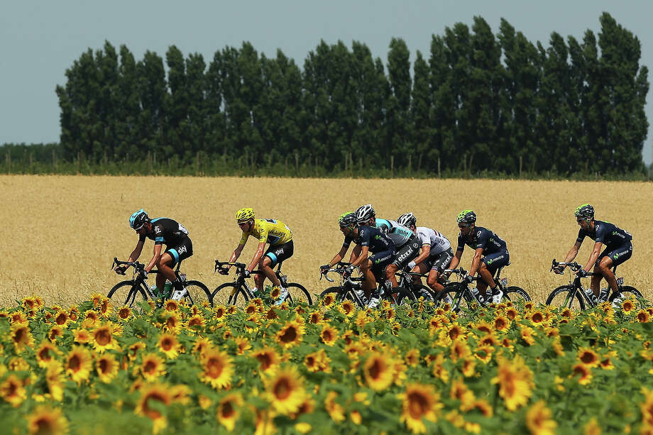 The peloton rides past a field of sunflowers during stage fifteen of the 2013 Tour de France, a 242.5KM road stage from Givors to Mont Ventoux, on July 14, 2013 in Givors, France. Photo: Bryn Lennon, Getty Images / 2013 Getty Images