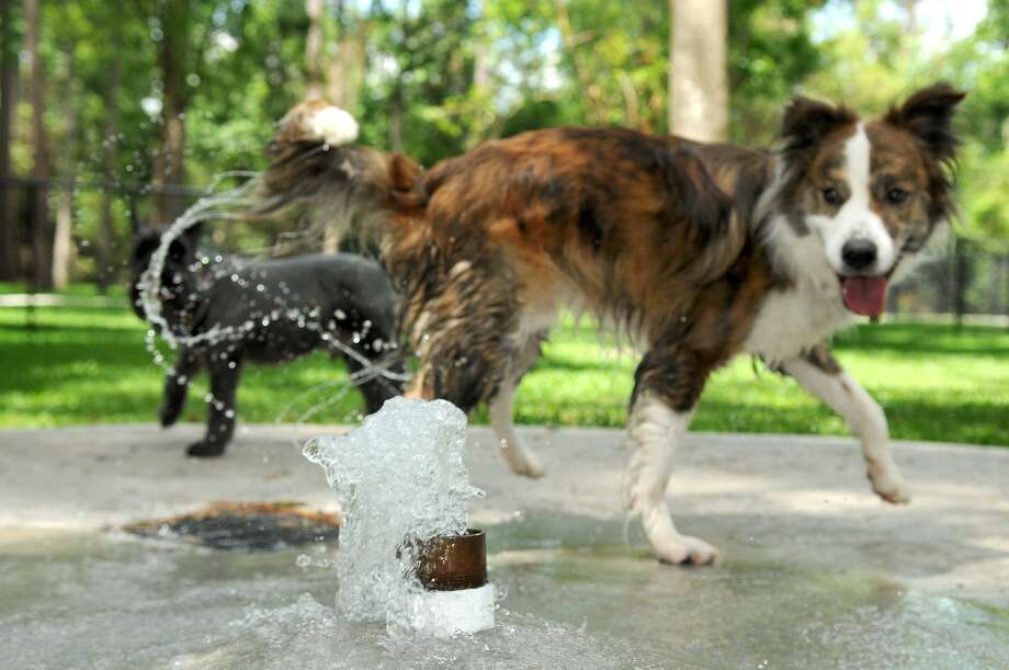 Barkley, belonging to Paul Alli, cools down in the water fountain at Wiggley Field, a new dog park located in Imperial Oaks. Photo: Jerry Baker, Freelance