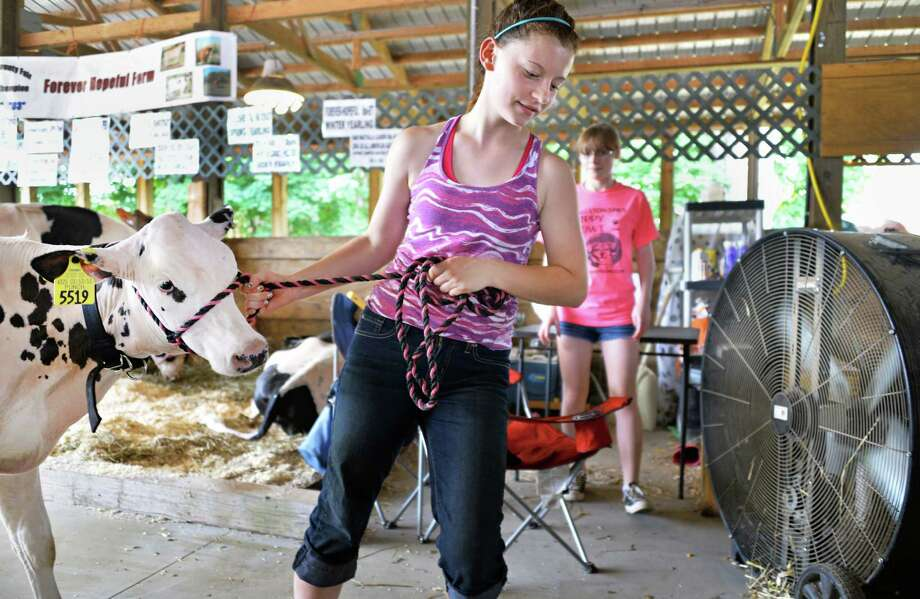 "Rachel Sherman, 14, of Galway leads her calf ""Minnie"" to a large fan in the Bovine Center at the Saratoga County Fair in Ballston Spa, NY Tuesday July 16, 2013.  .(John Carl D'Annibale / Times Union) Photo: John Carl D'Annibale / 00023171A"