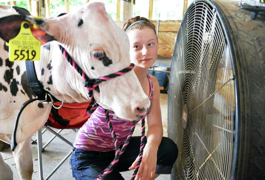 "Rachel Sherman, 14, of Galway cools off her calf ""Minnie"" at a large fan in the Bovine Center at the Saratoga County Fair in Ballston Spa, NY Tuesday July 16, 2013.  .(John Carl D'Annibale / Times Union) Photo: John Carl D'Annibale / 00023171A"