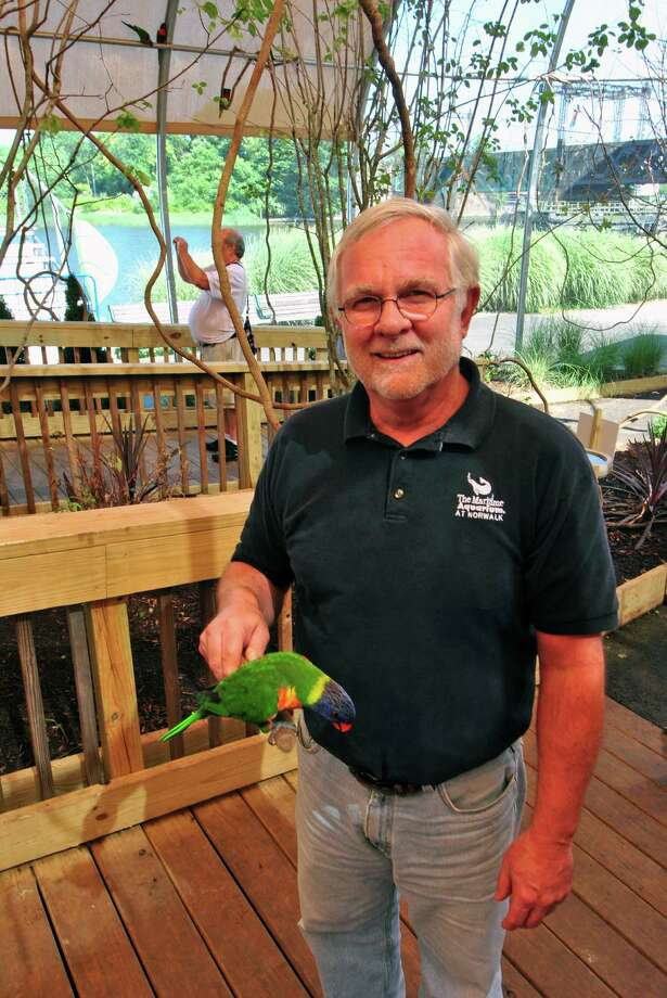 Jack Schneider, curator of animals at the Maritime Aquarium in Norwalk, visits the lorikeet exhibit Tuesday after he and other employees and volunteers were recognized at the organization's 25th birthday party Tuesday. Photo: Jordan Osterhout / For The Norwa