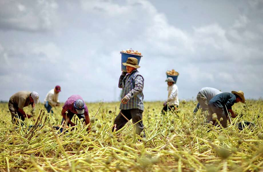 Guest workers harvest an onion field in Lyons, Ga., last month. A reader says current laws on immigration are not working and cause more hardship. Photo: David Goldman, Associated Press / AP