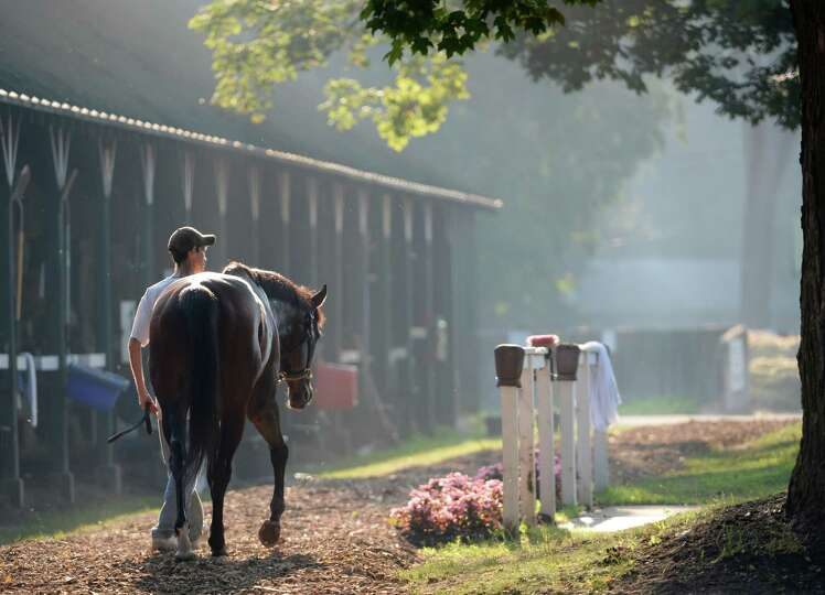A horse cooled out after his morning exercise as the sun shines through the haze Thursday morning, J