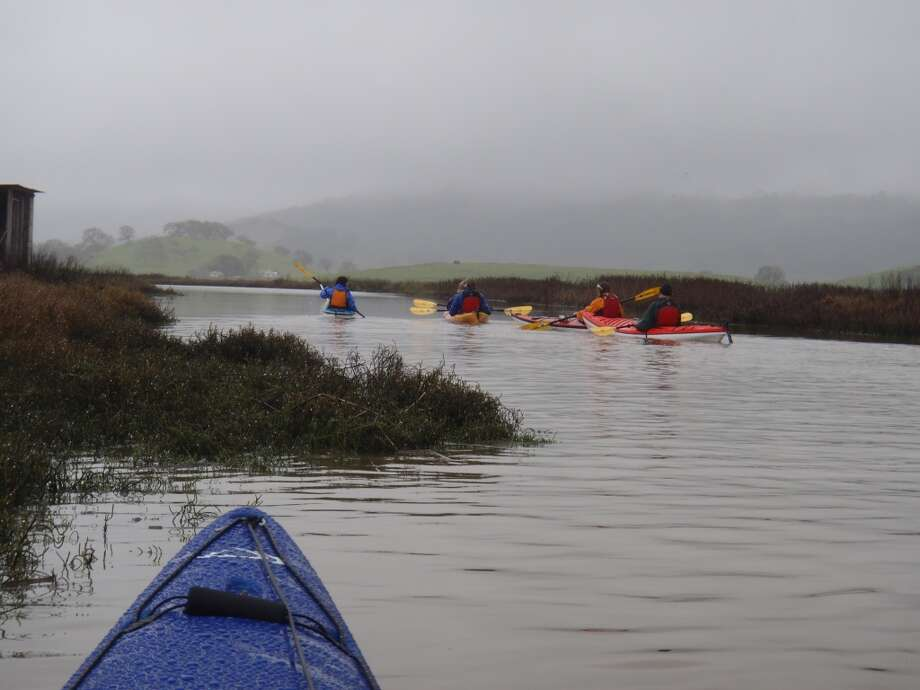 On a foggy summer morning, Petaluma River looks like a Scottish moor as group paddles off on trip into Petaluma Marsh and wildlife area.