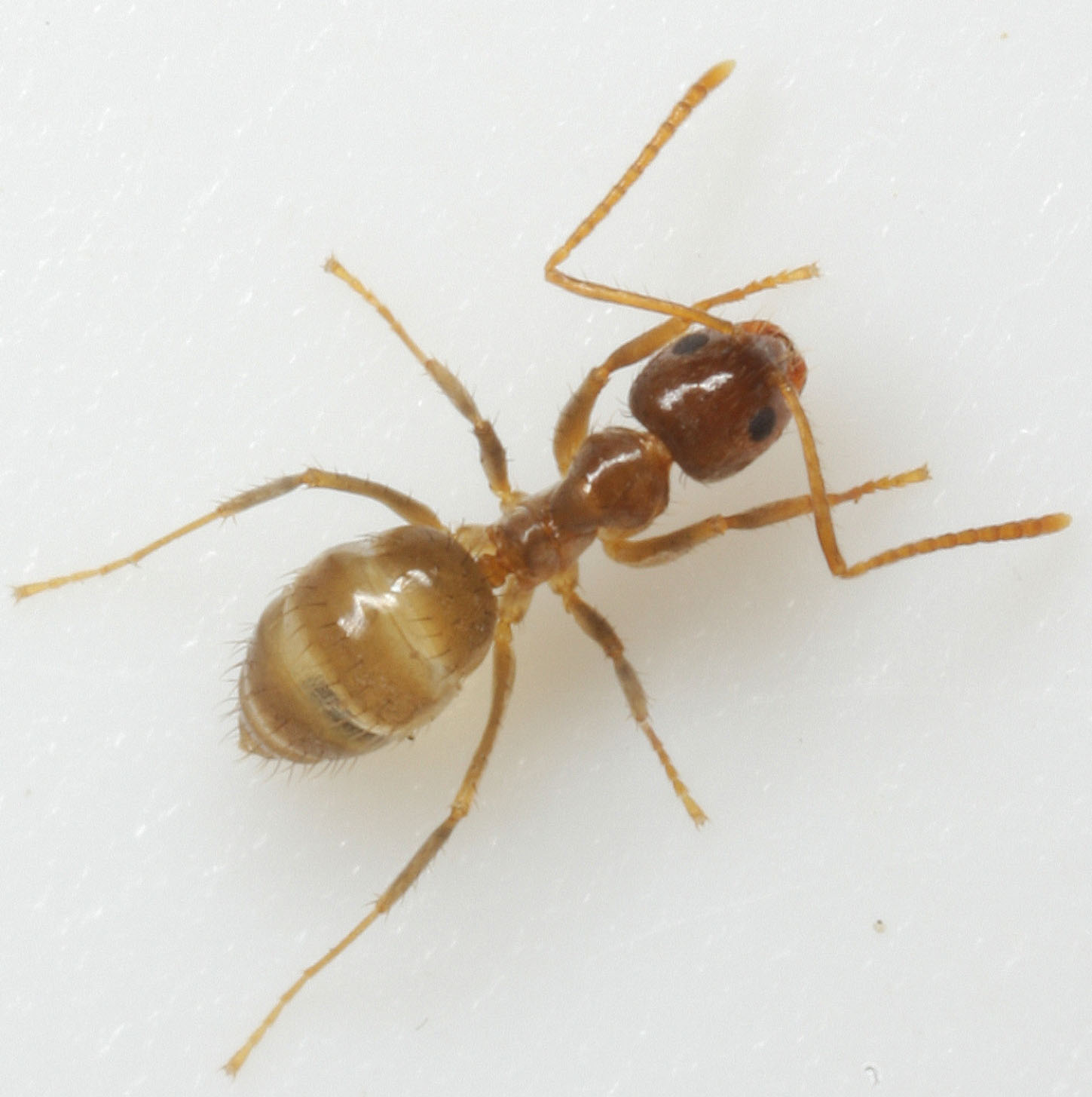Tiny Ants In Home Central New York