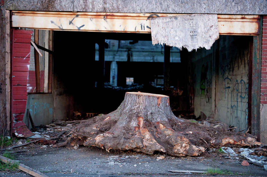 A tree stump sits among the ruins of the Packard Automotive Plant, a 35 acre site where luxury cars were manufactured until the 1950's on May 2, 2013 in Detroit, Michigan. Sitting on the East side of Detroit, the former automotive plant is now a site for scavengers, urban explorers and graffiti artists. Photo: Christian Science Monitor, Christian Science Monitor/Getty  / 2013 The Christian Science Monitor