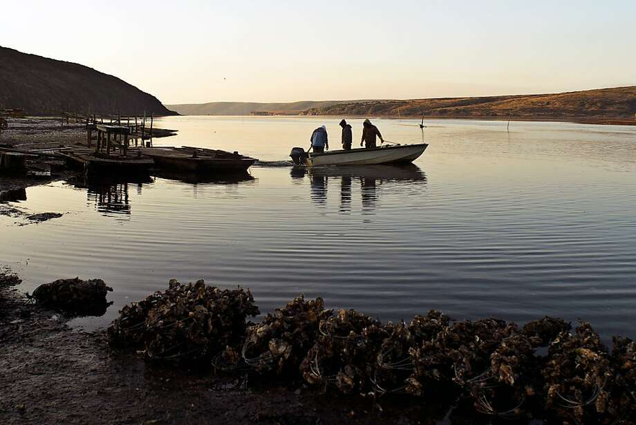 Workers get set to launch at Drakes Bay Oyster Co., which is fighting closure. Photo: Alvin Jornada, Special To The Chronicle