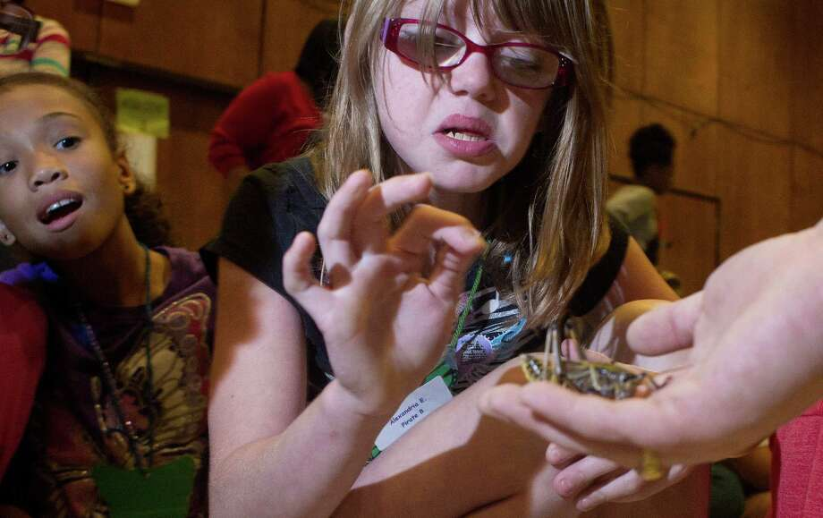Alexandria Easton, 10, reacts when she touches a cricket during a Houston Museum of Natural Science presentation about bugs at the Project T.A.L.K. summer camp for children with hearing loss at The Center for Hearing and Speech Thursday, July 18, 2013, in Houston. The Center's Speech Language Pathology clinic is teamed up with audiology students from the University of Houston Department of Communication Sciences and Disorders to host the weeklong interactive program. The camp allows children to improve their listening, speaking and reading skills all while developing leadership skills and making friends. Photo: Johnny Hanson, Houston Chronicle / © 2013  Houston Chronicle