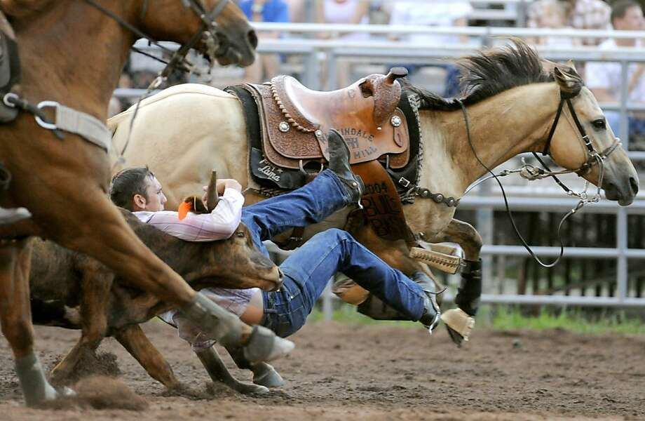 Cody Tracy slides down onto his steer before taking it down in a time of 9.2 seconds in the steer wrestling event Thursday, July 18, 2013, at the 29th annual Benton Rodeo Association Frontier Days Celebration, Championship Rodeo and Bull-A-Rara in Benton Pa. (AP Photo/Bloomsburg Press Enterprise, Jimmy May) Photo: Jimmy May, Associated Press