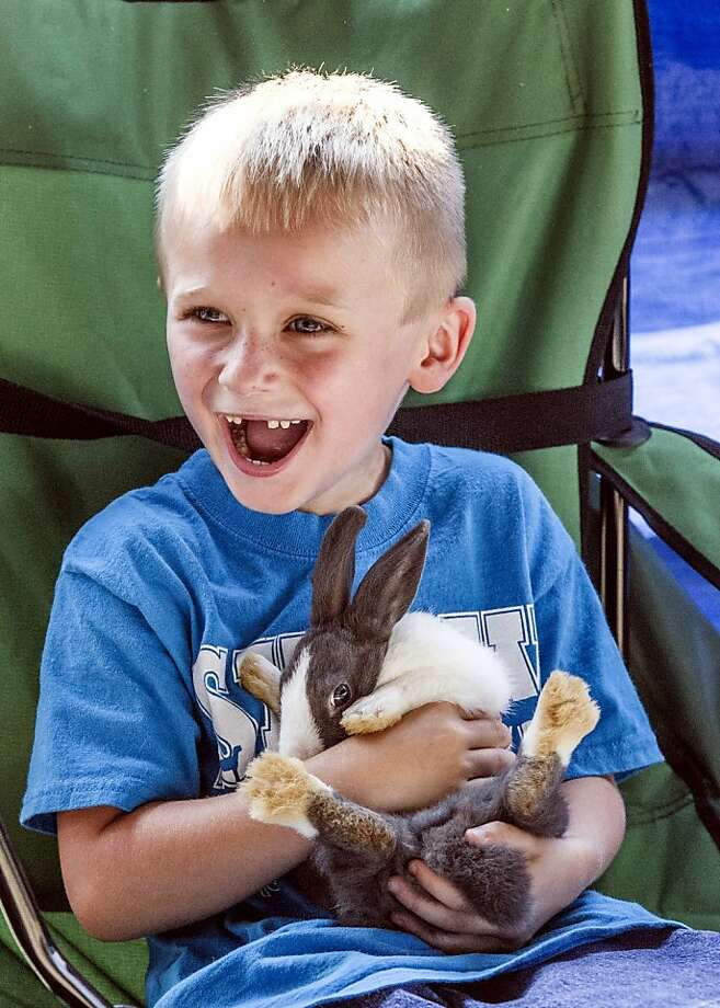 Watch me pull a rabbit out of my lap: Five-year-old Slade Brogle is having a better time at the Boyle County Fairgrounds' Agriculture Days than his bunny. (Danville, Ky.) Photo: Clay Jackson, Associated Press