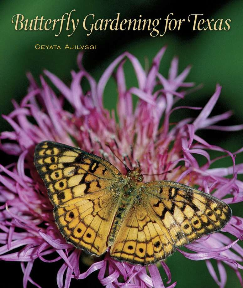 """Butterfly Gardening for Texas"" by Geyata Ajilvski guides gardeners in all parts of the Lone Star State with information about plants and the insects. It includes plant lists, butterfly identification and suggested designs for gardens."