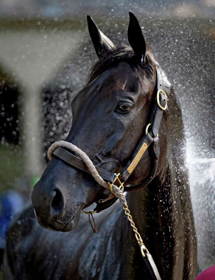 Eblouissante is given a cooling bath in the barn area of the Oklahoma Training Center  July 19, 2013 in Saratoga Springs, N.Y.   (Skip Dickstein/Times Union) Photo: SKIP DICKSTEIN