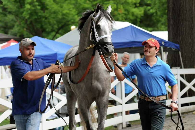 Grooms escort a spirited thoroughbred on Saturday, July 20, 2013, at Saratoga Race Course in Saratog