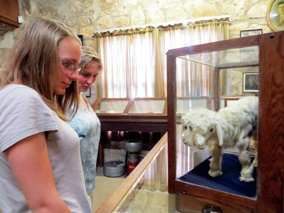 """Attractions like the two-headed goat on display at the Frontier Times Museum in Bandera have long made the """"cowboy capital"""" a hit with Europeans, including Elena Jourda (left) and her mom, Lydia Jourda, who were visiting this week from France. Photo: Zeke MacCormack"""
