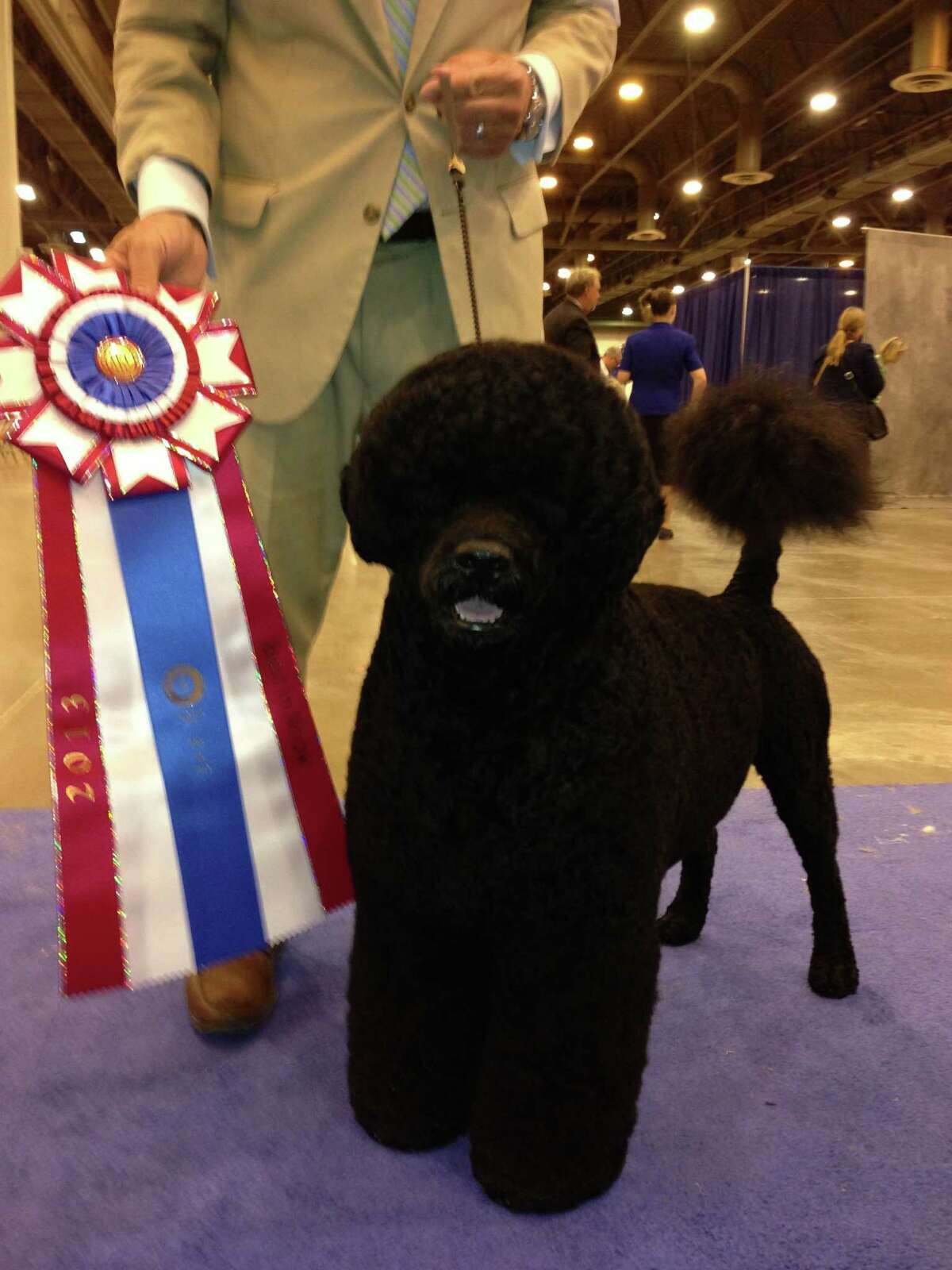 Michael Scott handler of the top dog at The Reliant Center World Series of Dog Show. Two year-old Portuguese Water Dog,Claircreek Impression De Matisse of Chesapeake City, MD, Sunday, July 21,2013 at Reliant Center.