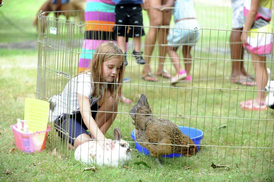 Emily Iorio, 8, pets a rabbit and a chicken at Bruce Museum Family Day- Egg Day at Bruce Museum in Greenwich, Conn., Sunday, July 21, 2013. Photo: Helen Neafsey / Greenwich Time
