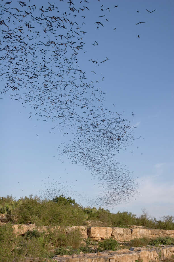 Thousands of Mexican free-tailed bats fly out of the Frio Bat Cave, near Concan, on a summer evening.  Bats are vital to a healthy eco-system because they feed on insects and pollinate plants.  The United Nations has designated 2011-2012 as the International Year of the Bat.  Photo Credit:  Kathy Adams Clark.  Restricted use. Photo: Kathy Adams Clark / Kathy Adams Clark/KAC Production