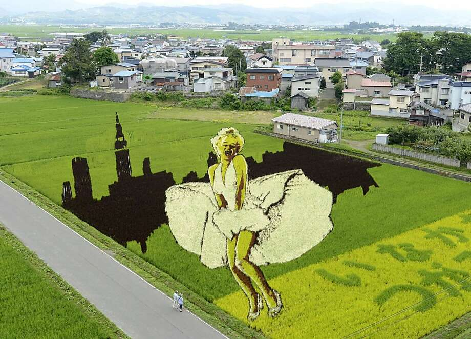 "Paddy cheesecake: It took nine species of rice to produce a ""Seven Year Itch"" image of 